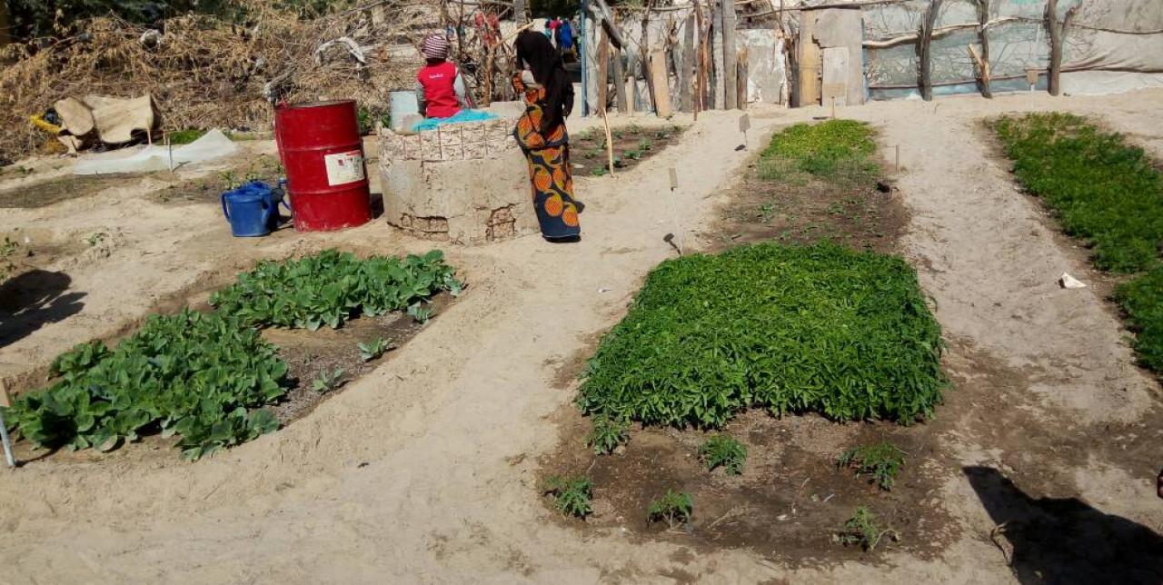 Niger, genitori coltivano orti a scuola