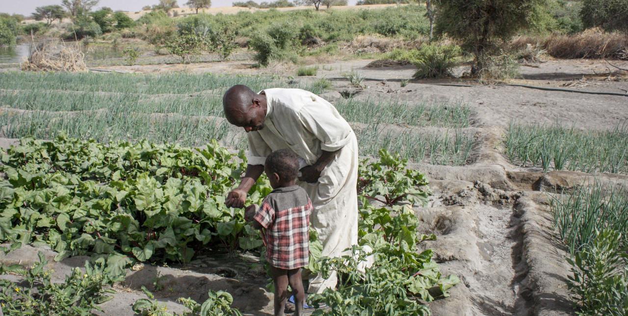 Lago Ciad: viaggio tra i contadini che sfidano la desertificazione