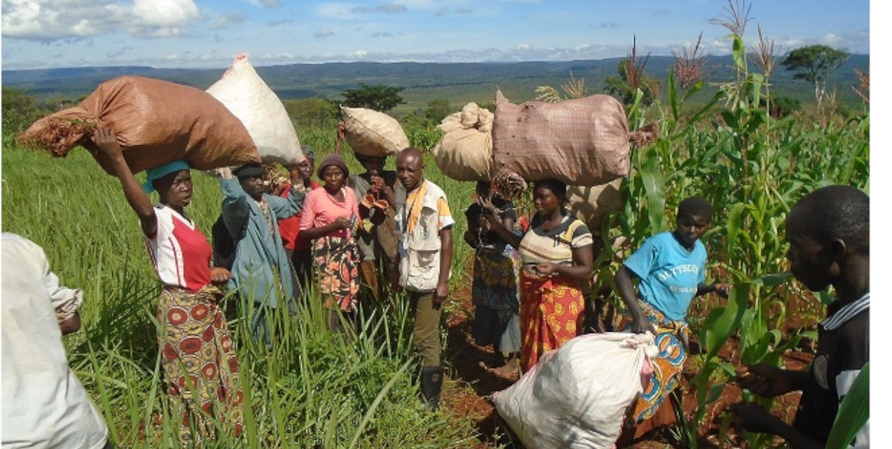 DRC: from food security to Upemba park conservation