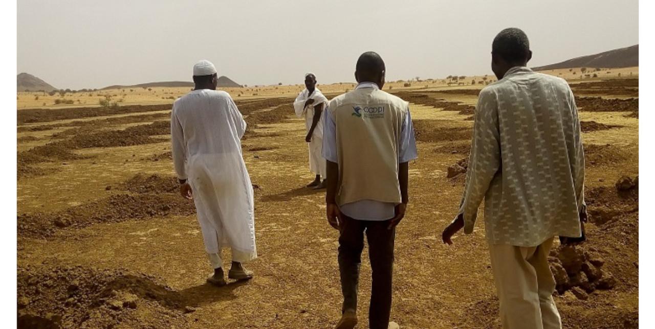 Cambiamento climatico: 10.000 plantule per ripristinare le foreste comunitarie in Nord Darfur