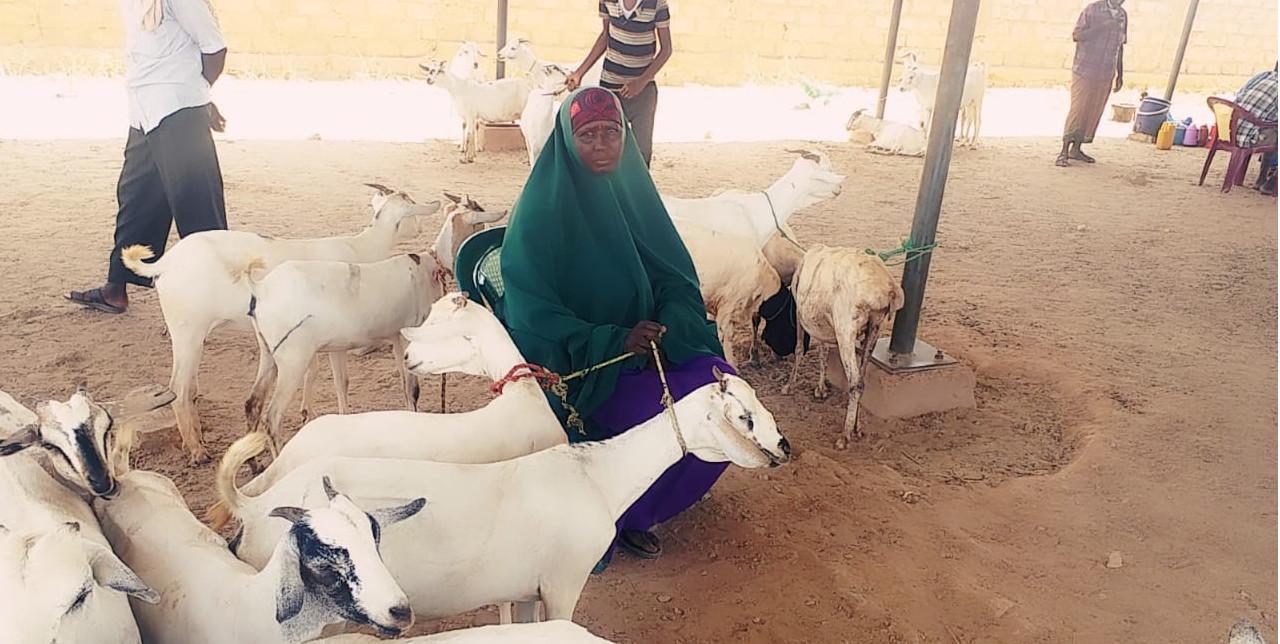 Somalia. Livestock marketing transforming communities: a story of Markabo Maxamed Farax.