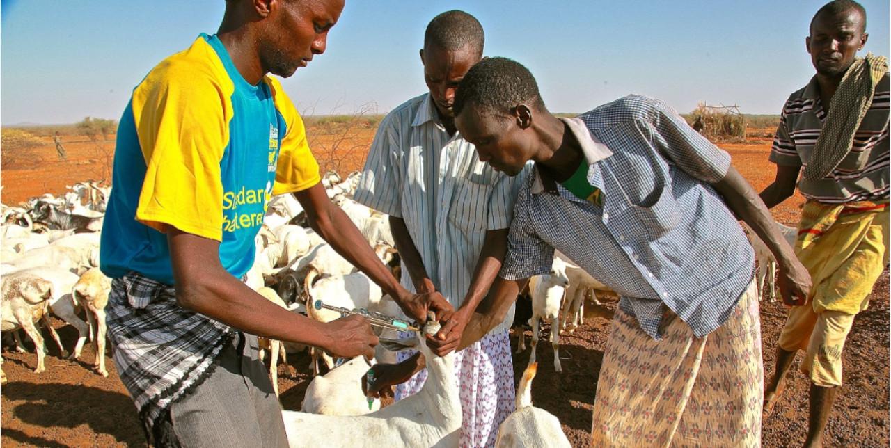 Somalia. Sanbur's farm has started over