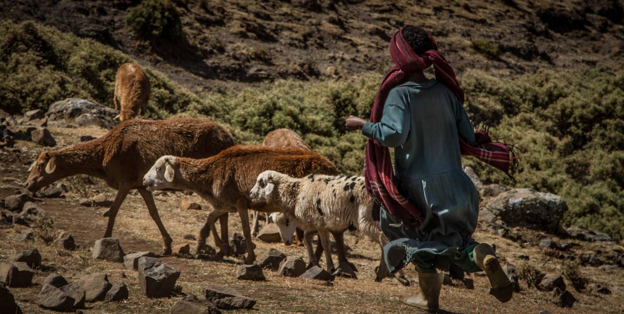 Ethiopia: new economic opportunities