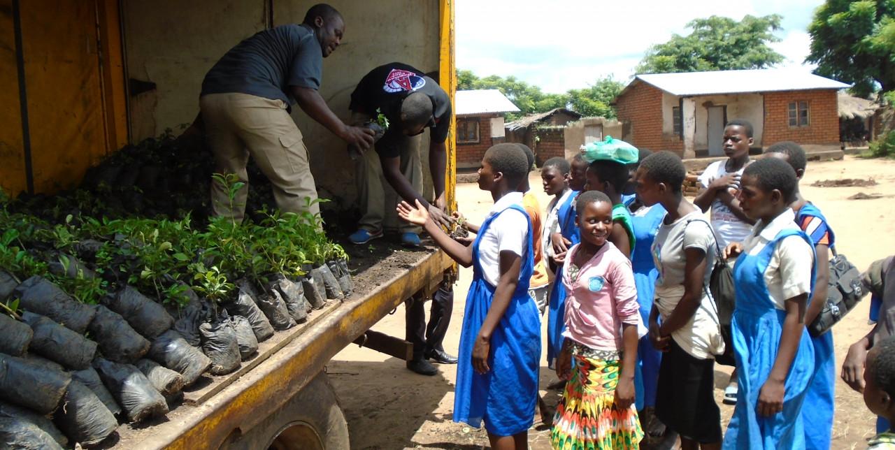 Fruit trees in schools