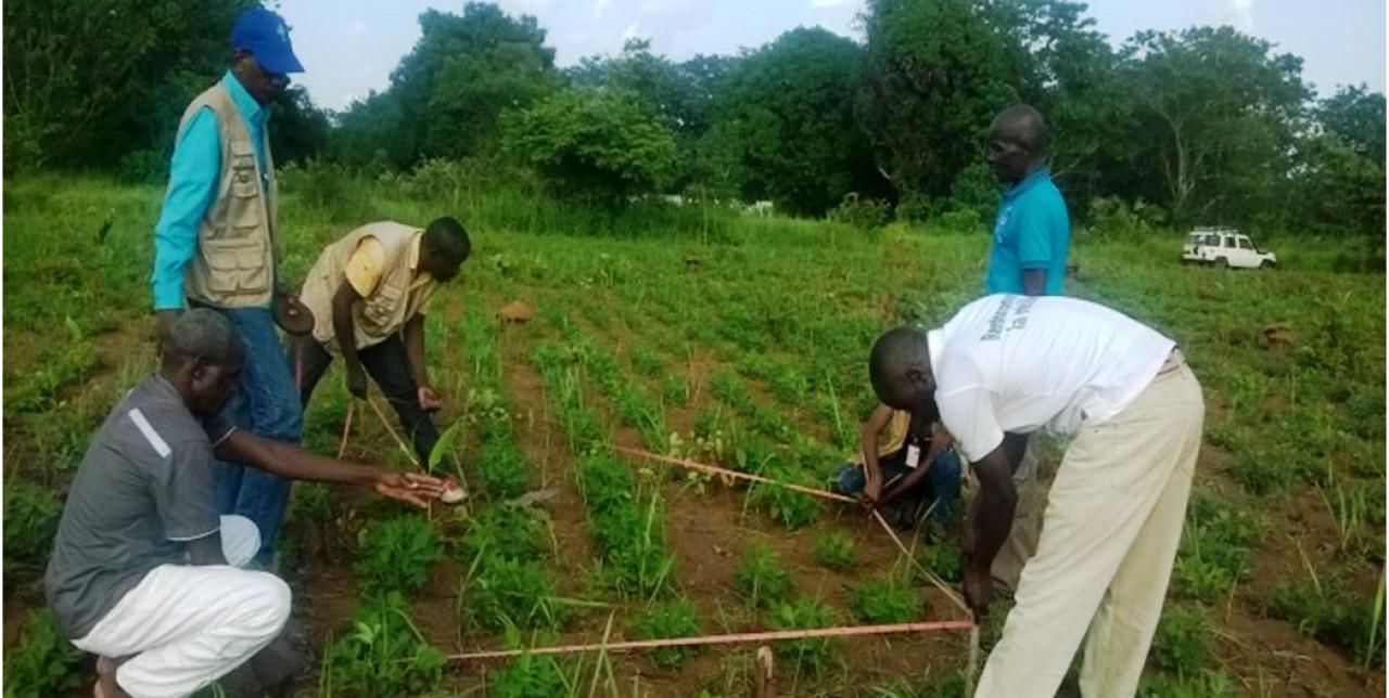 I produttori locali di Bambari rialzano la testa